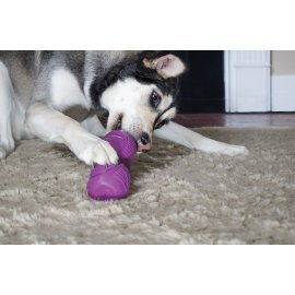 Busy Buddy® Squeak 'n Treat Ooga™ - Medium