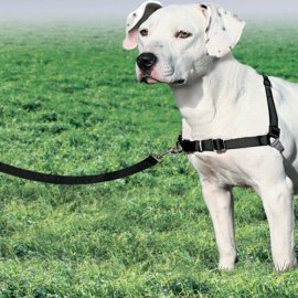 Easy Walk Dog Harness - Medium - Black