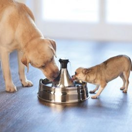 Drinkwell 360 Stainless Steel Dog Water Fountain